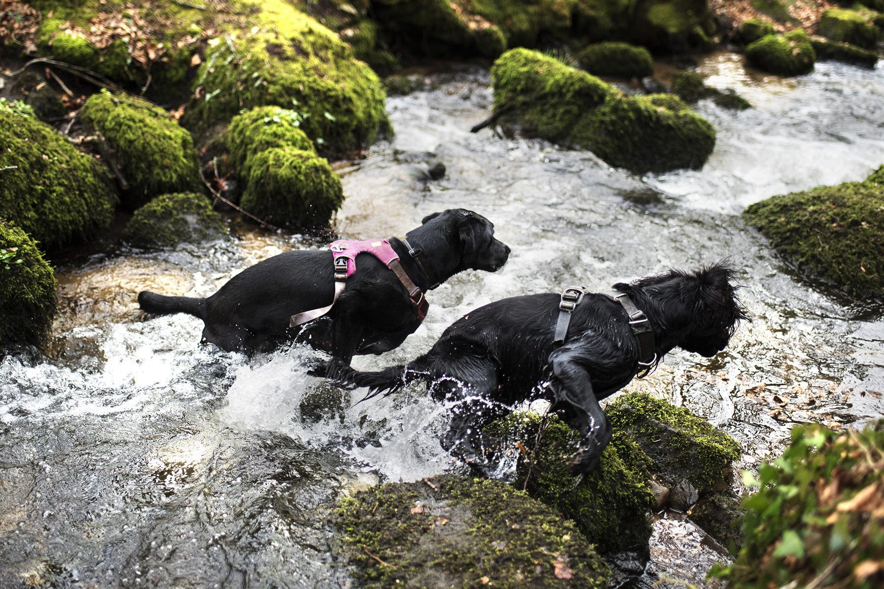 Ruffwear Front Range Harness | The Cornish Dog