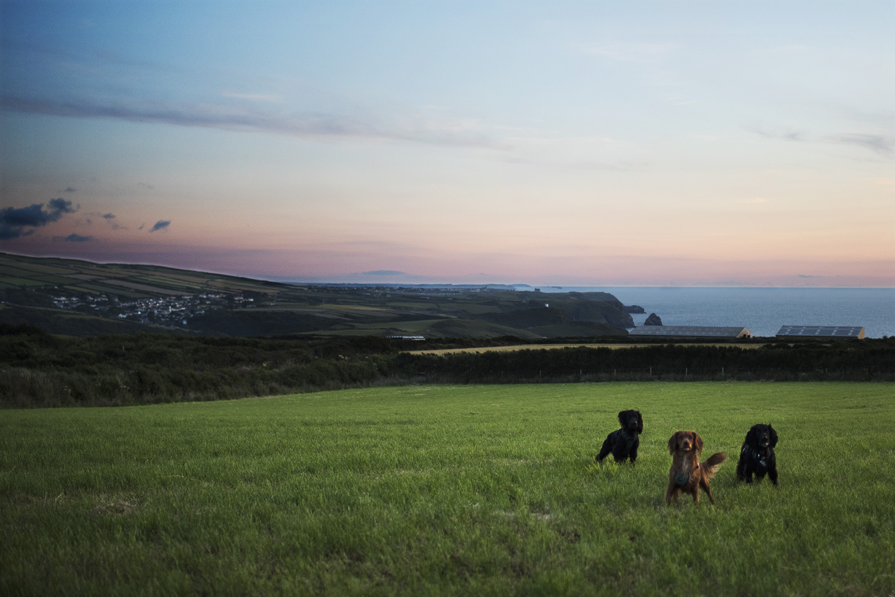 Wild Camping Sunsets | The Cornish Dog