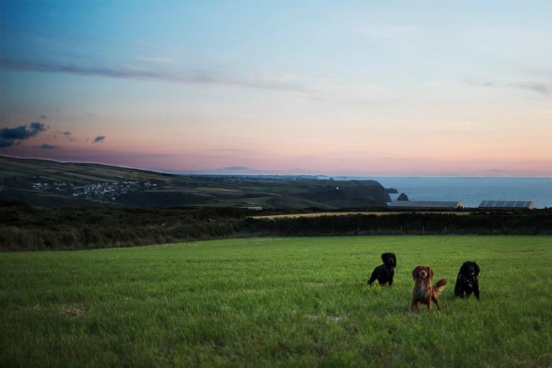 Wild Camping Sunsets   The Cornish Dog
