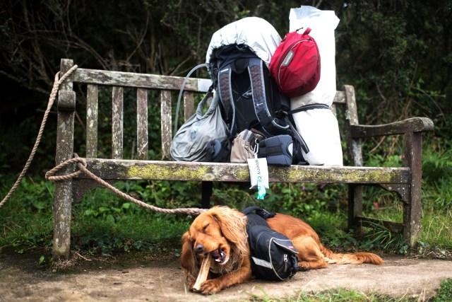 Chew Break on the Cornish Coast Path - The Cornish Dog