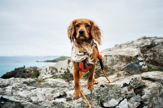 Hen Posing in St Ives | The Cornish Dog