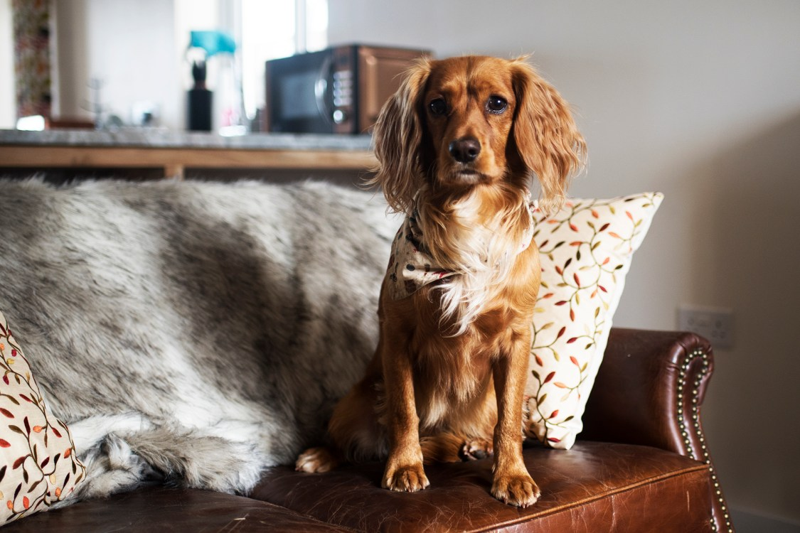 A Dog Friendly Stay at The Woodland Collection | The Cornish Dog
