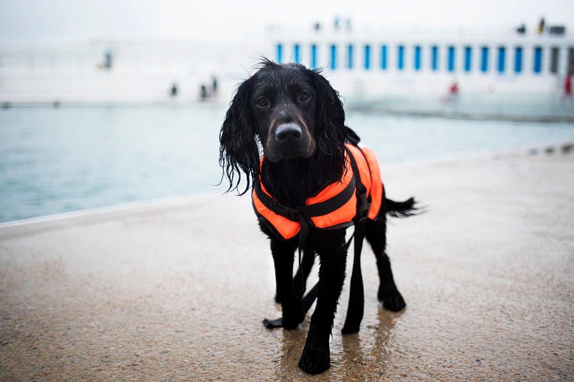 Woody at Jubilee Pool | The Cornish Dog