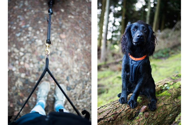 DogFit UK Canicross Starter Set | The Cornish Dog