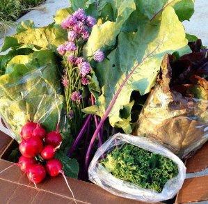 Bundle of veggies