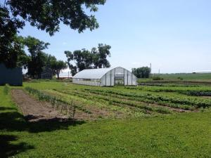 Old hoop house and fields