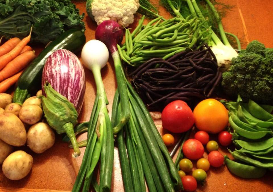 Cornucopia Extra: Fall produce available for bulk purchase