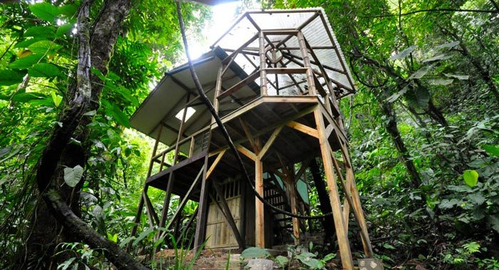 Finca Bellavista: Treehouse Community