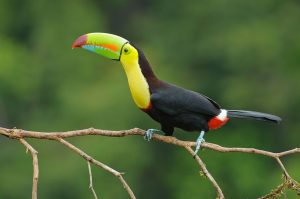 German Family Takes on Deforestation and Biodiversity in Costa Rica