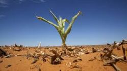 drought plant climate change