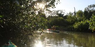 Kayak Tour Golfo Dulce Mangroves