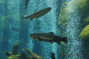 Trouts fish tank exhibition La Paz Waterfalls Park