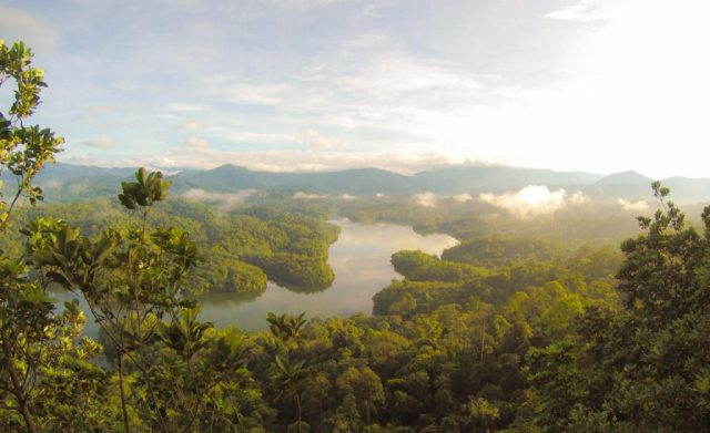 costa rica jungle