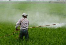 herbicide costa rica