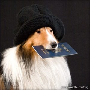 Animals are also required to have documents when traveling abroad.