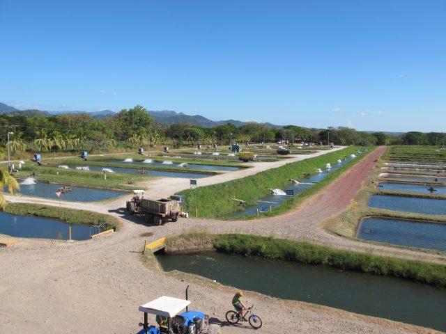 Ponds of the company Aqua Corporation