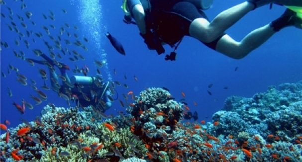 Divers conducting research on the growth of shark populations