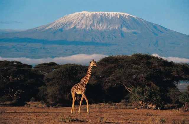 Kilimanjaro is considered an extinct volcano in Africa.