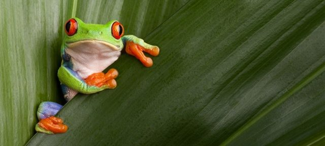 This frog shows very lively colors.