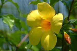 Flora of Manuel Antonio National Park