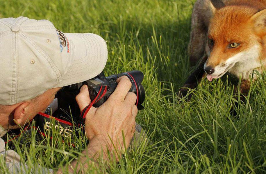 Nature photographer behind scenes animals