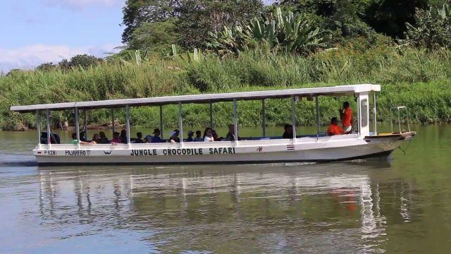 There are many guided tours to watch crocodiles in the wild.