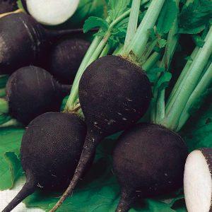 Black Winter radish