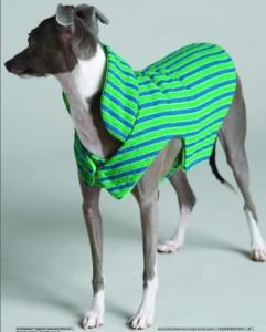 Greyhound Coat Pattern : greyhound, pattern, Sewing, Pattern, Greyhound
