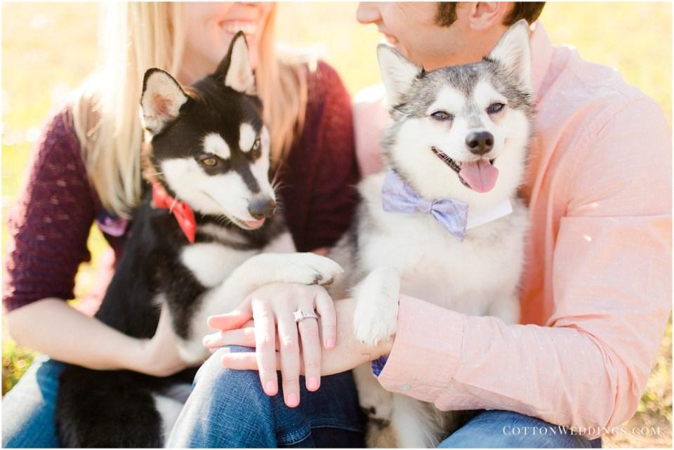Alaskan Klee Kai Puppy Engagement Photos