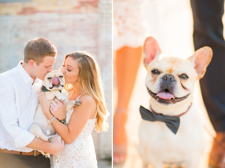 adorable frenchie french bulldog engagement session