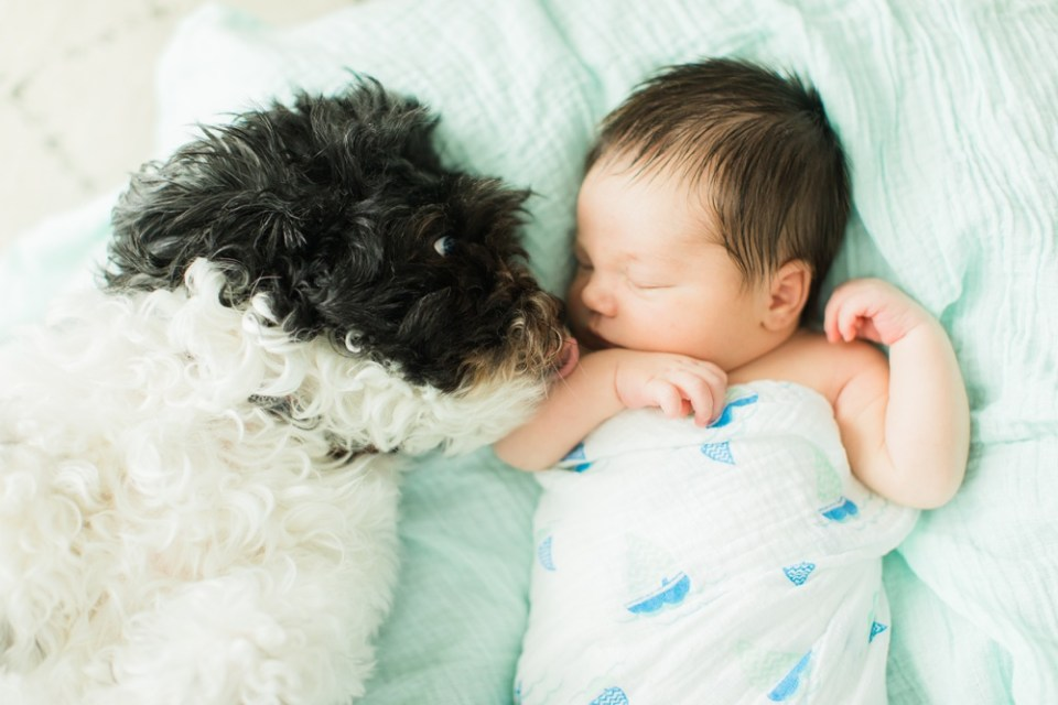 newborn and puppy photography