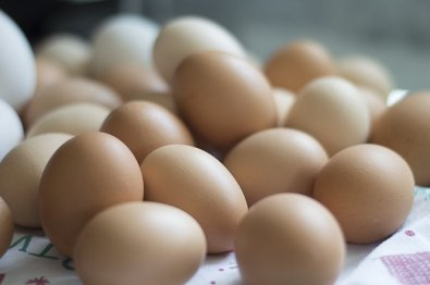 chicken lay eggs
