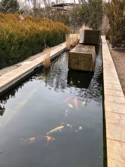 Sunrise Springs koi pond