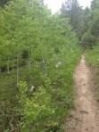 Grandjean hike