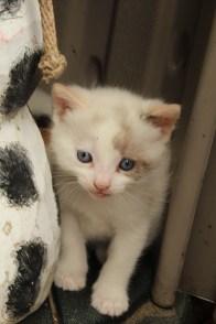 New Kittens! 024