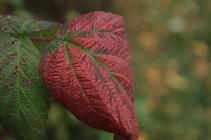 Fall - October 15, 2013 078