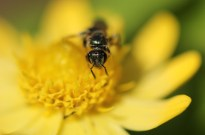 Macro, Flowers, Sky, Insects 041