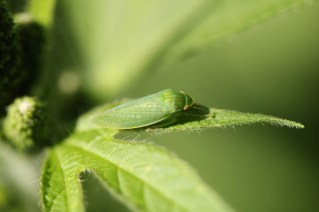 Macro, many insects 059