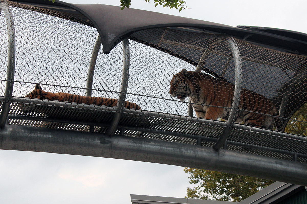 Philadelphia Zoo Oktobearfest 2017_IMG_1812