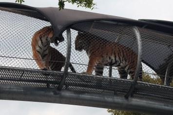 Philadelphia Zoo Oktobearfest 2017_IMG_1813