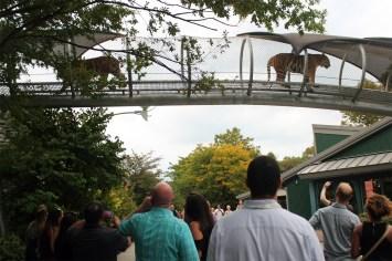 Philadelphia Zoo Oktobearfest 2017_IMG_1818