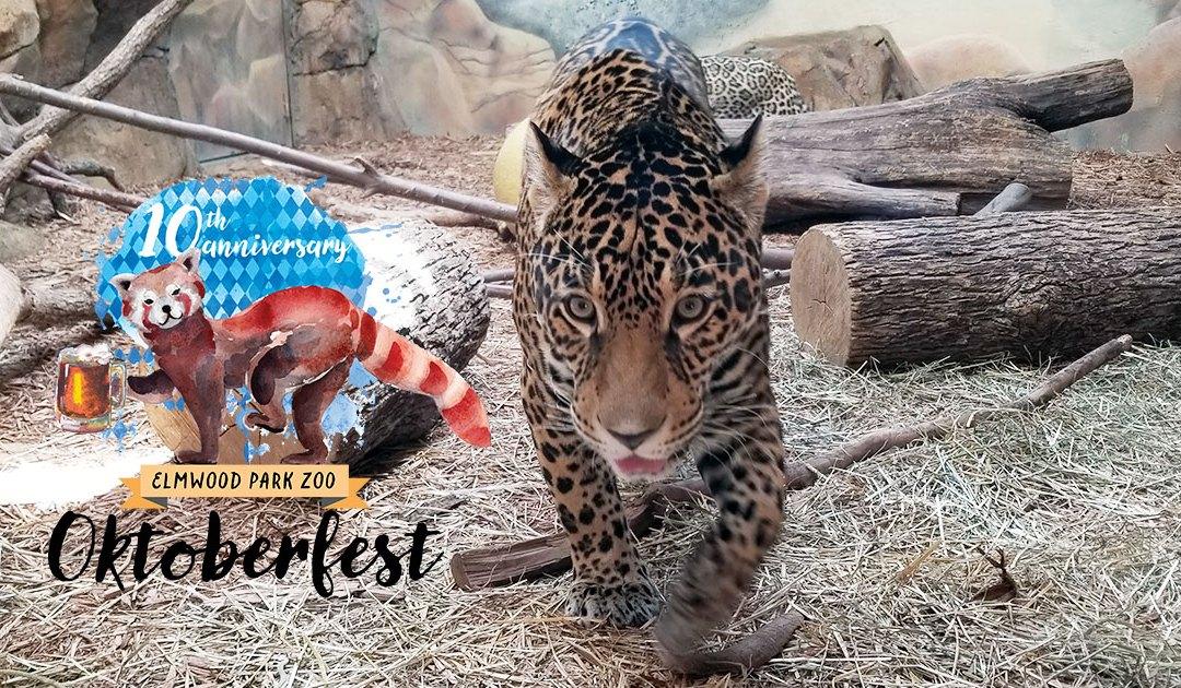 Recap: Oktoberfest 2017 at Elmwood Park Zoo