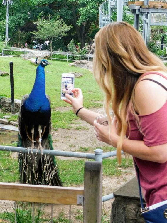philadelphia-zoo-summer-ale-festival_20180623-181409 (2)