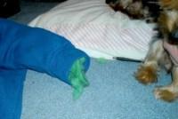 dog bed stuffing - 28 images - diy dog bed stuffing ...