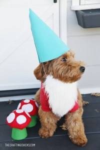 DIY Dog Costume Garden Gnome - The Crafting Chicks