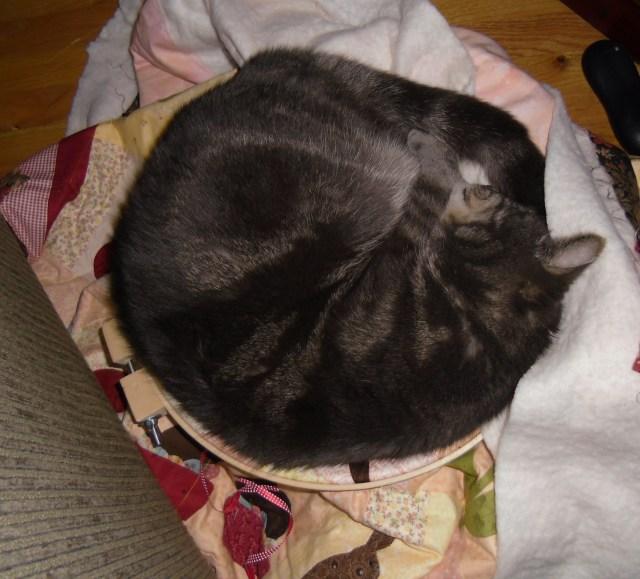 Flitz in quilt hoop 2