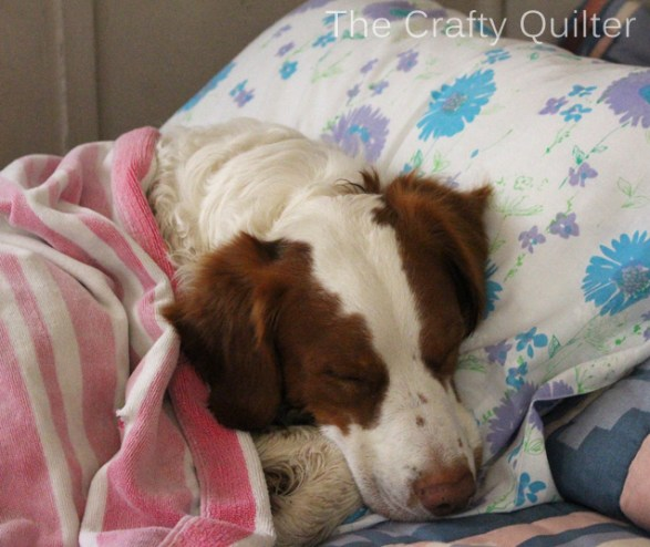 Cooper snuggling on a vintage pillow case