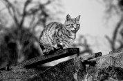 Animals dying. And living like Aristocrats   Six Word Stories: 673, by Nina KARADZIC   PhotoStory by Darius IVAN