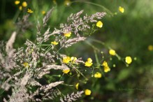 Summer flowers in the shunshine