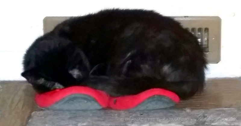 black cat sleeping on red slippers